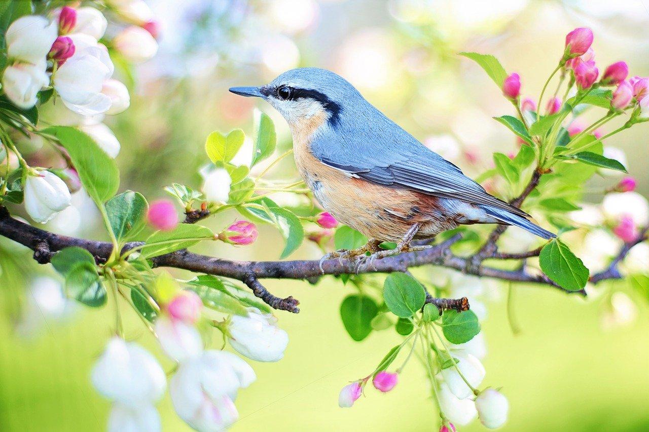 一足先に春の色を取り入れませんか?