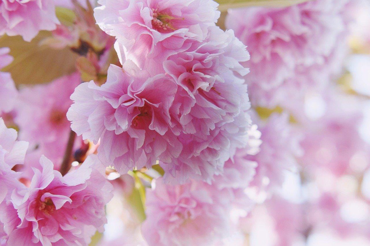 ピンク色のイメージと心理効果