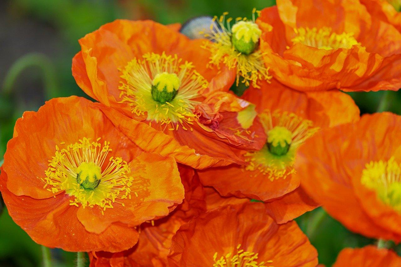 橙色のイメージと心理効果