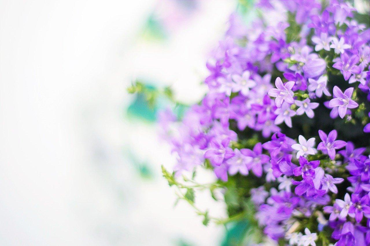 紫色のイメージと心理効果