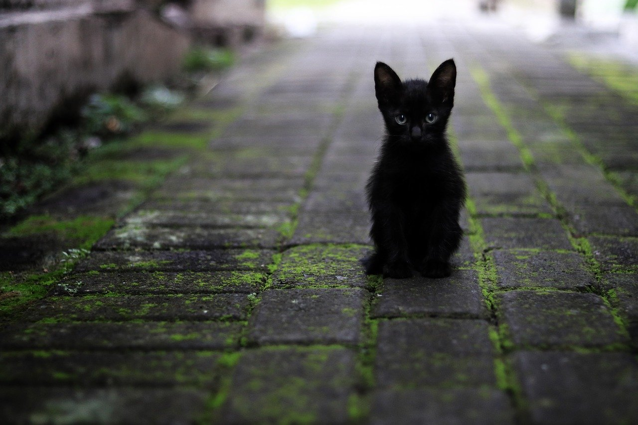 黒色のイメージと心理効果